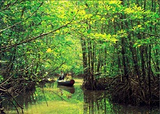 Can Gio Mangrove Forest