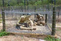 Coconut Prison